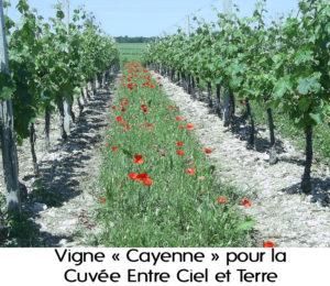 vigne cayenne avec texte